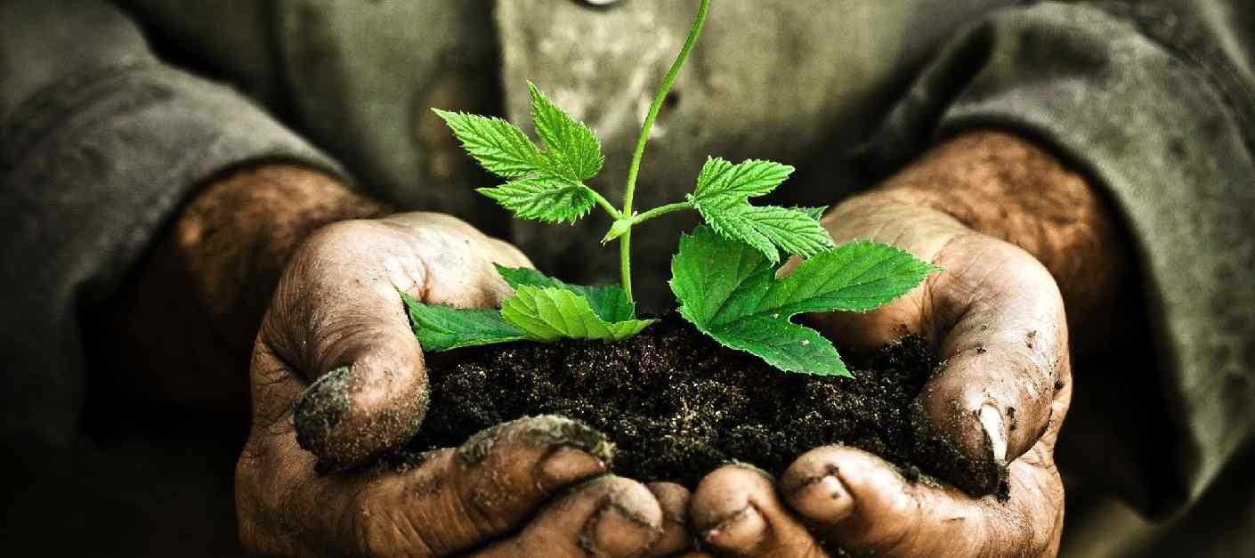 Grow  Plant  Discipleship